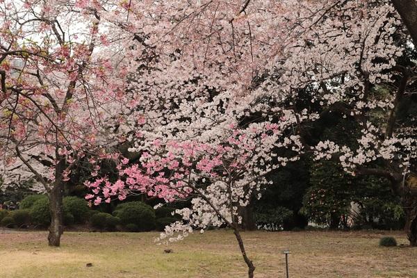 新宿御苑_190330_14.jpg