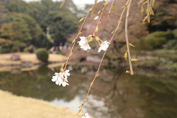 新宿御苑_190330_16.jpg