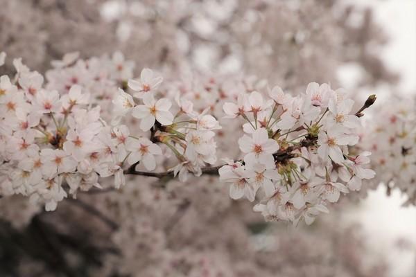 新宿御苑_190330_24.jpg