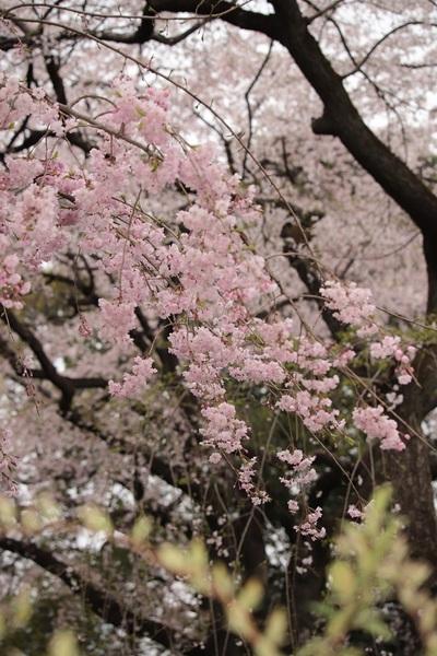 新宿御苑_190330_28.jpg