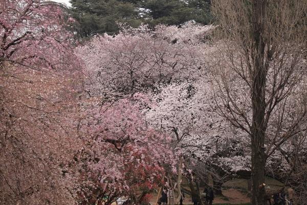 新宿御苑_190330_29.jpg