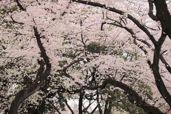新宿御苑_190330_32.jpg