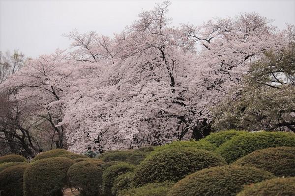 新宿御苑_190330_35.jpg