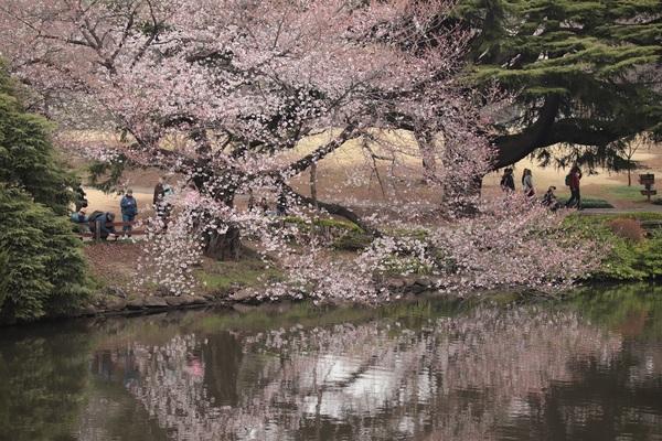 新宿御苑_190330_41.jpg