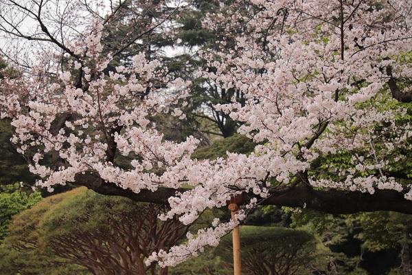 新宿御苑_190330_43.jpg