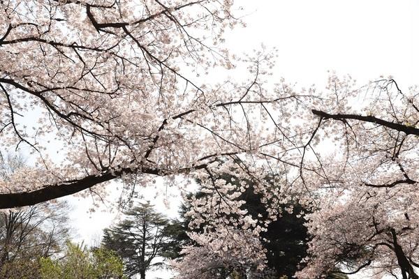 新宿御苑_190406_06.jpg