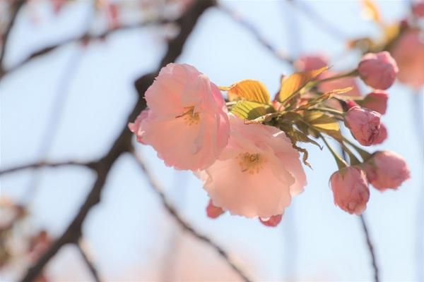 新宿御苑_190406_22.jpg