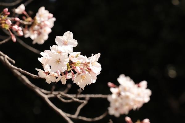新宿御苑_190406_31.jpg