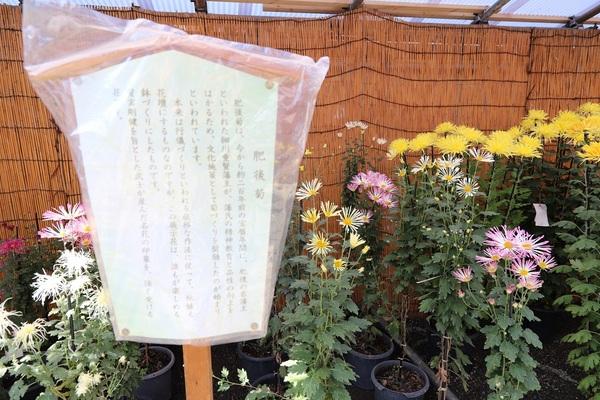 高幡不動_181110_15.jpg